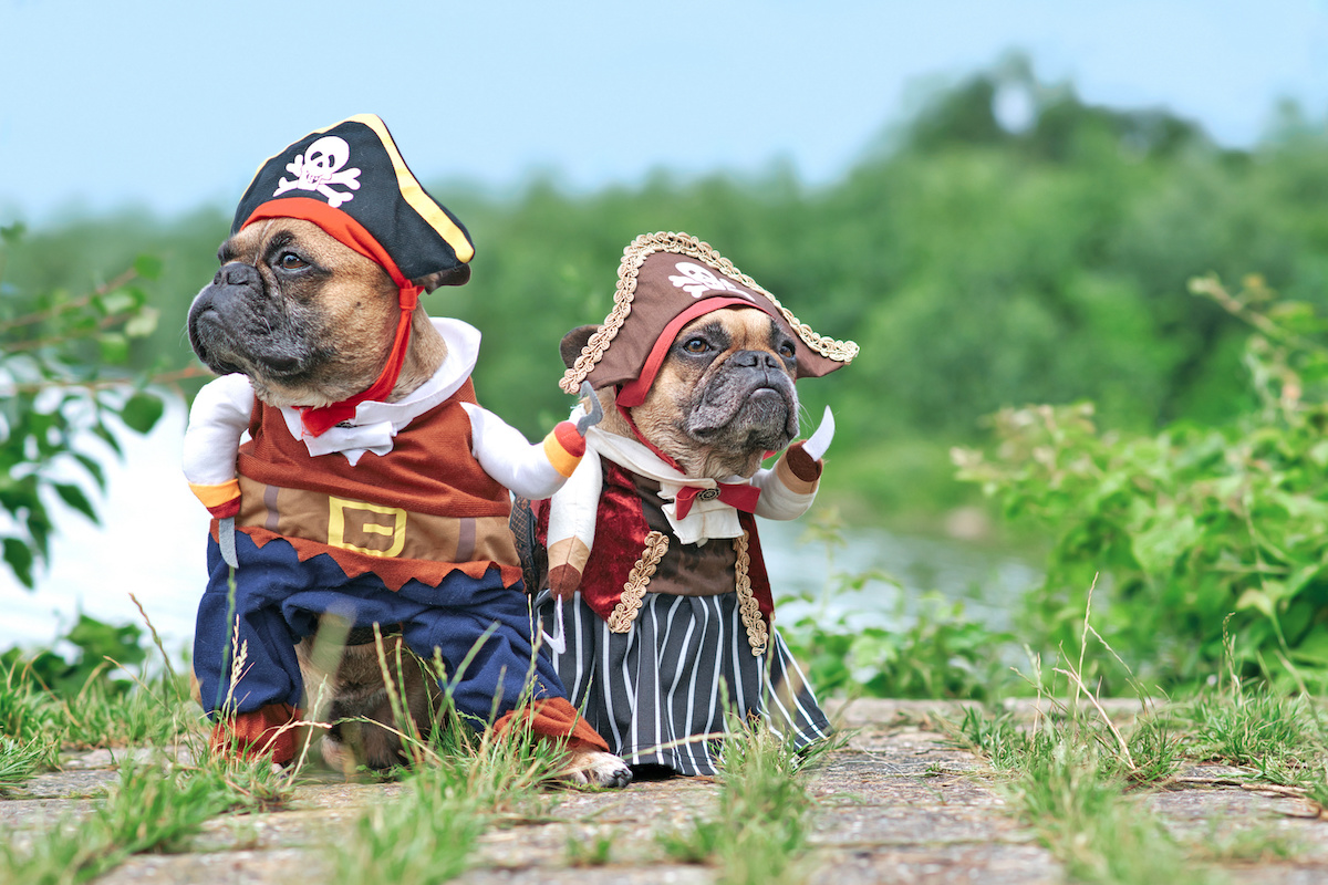 pirate dogs
