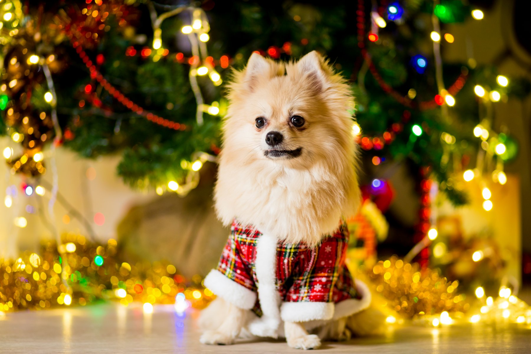 Christmas dog ideas for pups