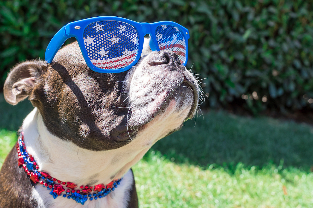 fourth of july dog costumes