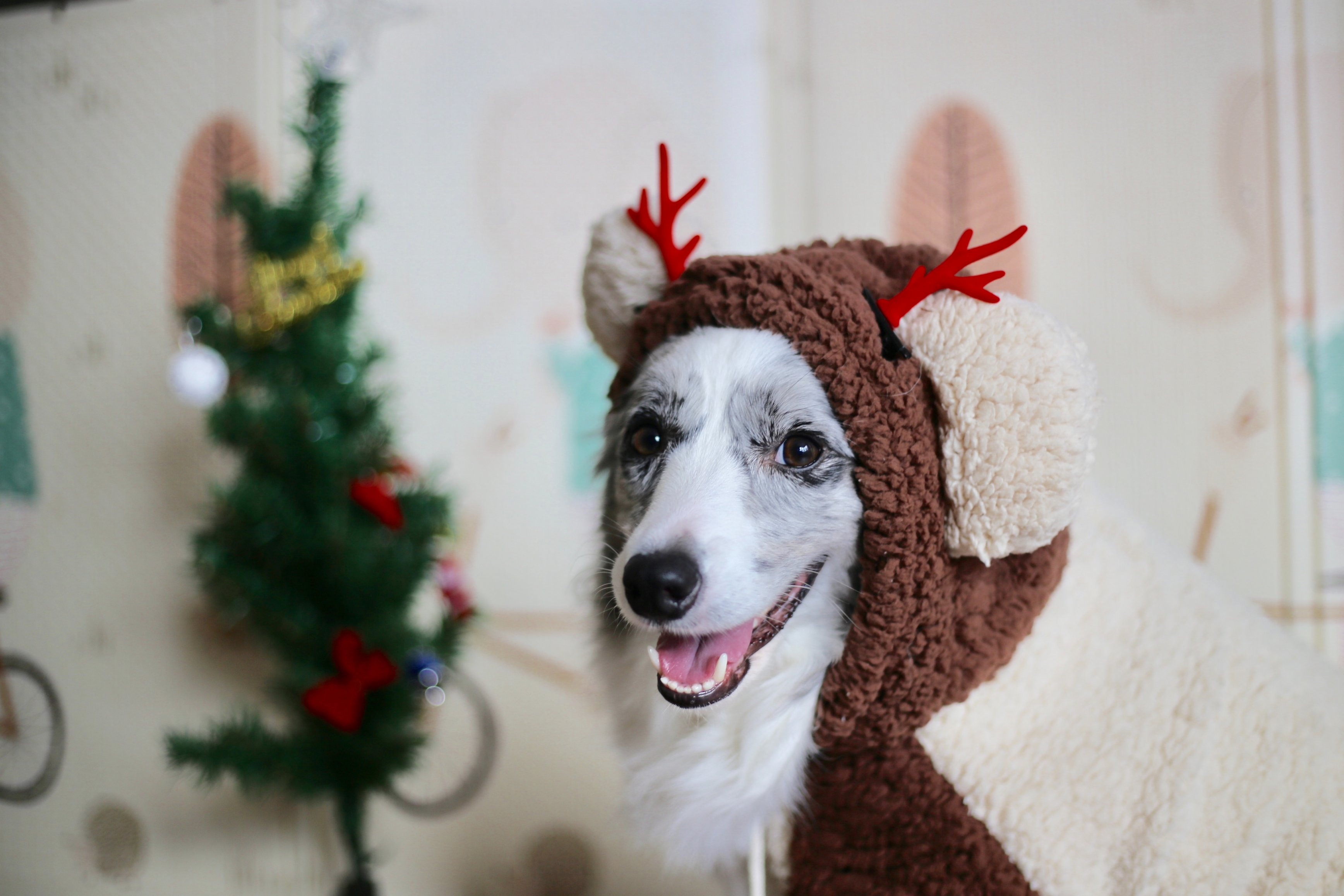 Best Christmas costumes for your dog