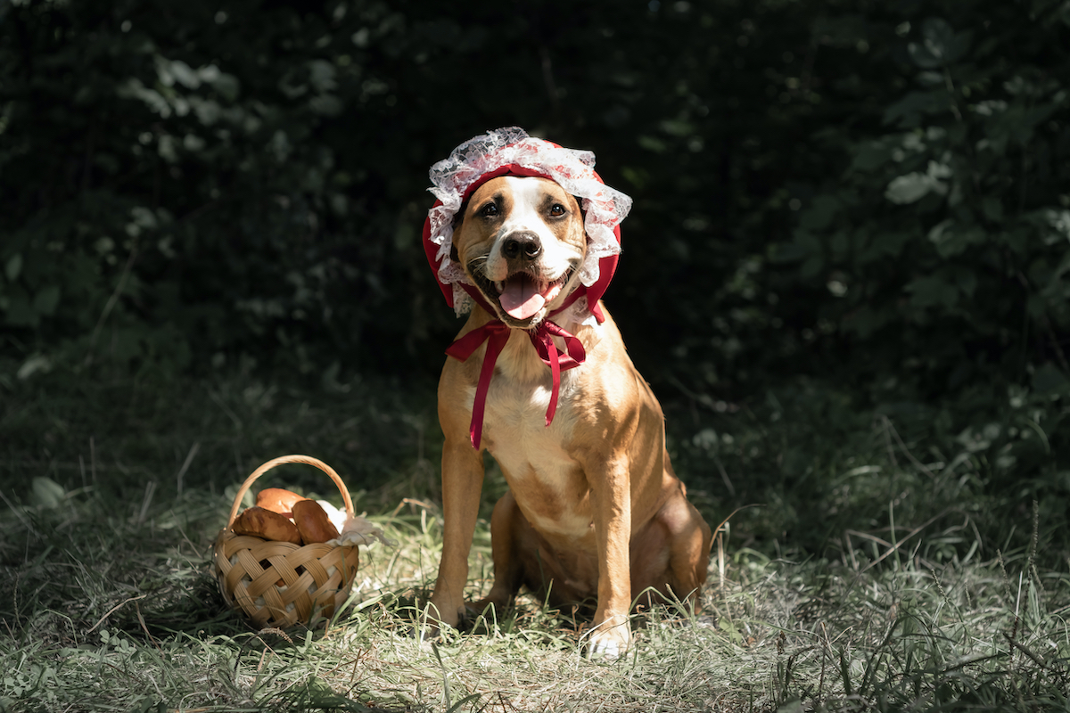 Halloween Costumes for Dogs and Puppies